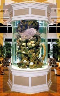 احواض اسماك الزينة ... وزوايا تنبض بالحياة في منزلك Aq