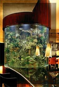 احواض اسماك الزينة ... وزوايا تنبض بالحياة في منزلك Aq6